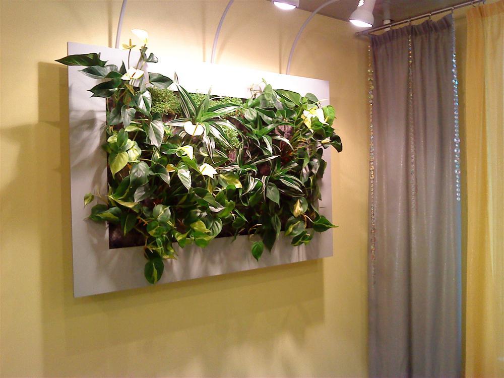 Картины из комнатных цветов